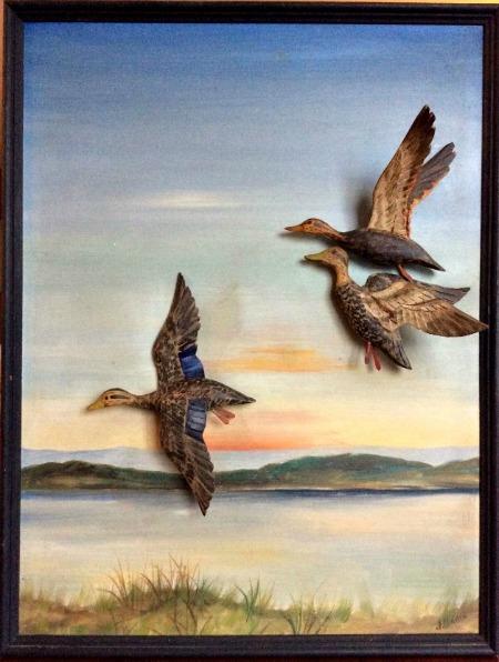 J. Hodge. Diorama of Three Ducks. N. S. Signed.